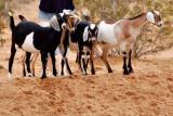 The Little herd