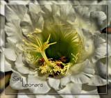 Pollen Seekers.