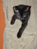John's Pocket Kitten