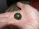 Green pill millepede