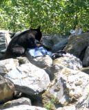 hungry-bear.jpg