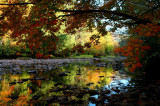 Williams River Fall Limbs Reflection rdx tb10082b