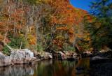 Williams River Late Autumn Colors tb1108f