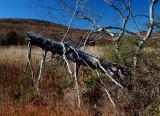 Old Prison Camp Fall Field Dead Tree tb11081a