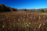Wide View Old Prison Camp Fall Field 11087h