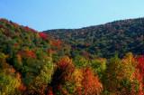 Autumn Hues Sugar Creek Branch tb10086r