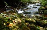 Sugar Creek Swifts  Fallen Leaves tb1005mmr.jpg