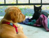 This black kitten lives in a nearby abandoned home.