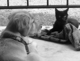 Bella  and The Stray Cat