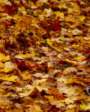Multi-layered - Autumn Leaves