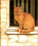 Tiger Cat.jpg