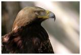 Le rocher des aigles - Rocamadour