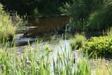 Pond near Mameo