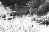 Pond 2