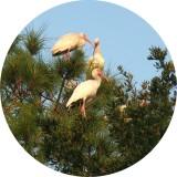 Birds at Our Paradise.JPG