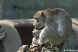 Monkey DSC_0455