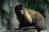 Monkey DSC_0452