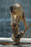 Monkey DSC_0461