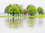 Rainy Day Trees 20080718