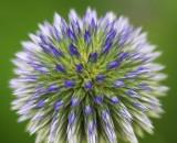 Round Flower 20080723