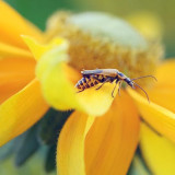 Bug On A Yellow-Orange Flower 17175