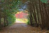 Tree Tunnel 23028