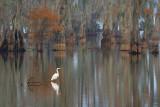 Lake Martin 25424