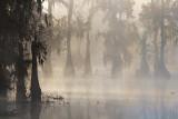 Lake Martin In Foggy Sunrise 26202