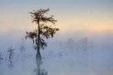 Lake Martin Cypress 26130