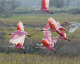 Birds Taking Wing 27888