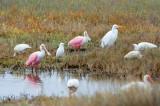 Wading Birds 29408