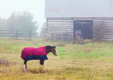 Horse & Barn 09790