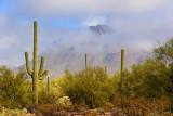 Lifting Desert Fog 76943