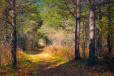 Stony Swamp Trail 26 (10181)