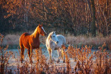 Two Horses On A Frosty Morning 20091111