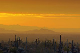 Desert At Sunrise 81714