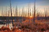 Marsh Sunrise 20091116