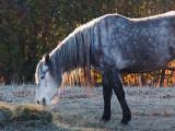 Backlit Horse 10807