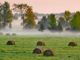 Morning Mist 20060918