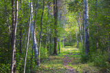Forest Path 20060921
