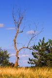 Dead Tree 20060922