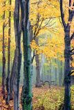 Autumn Trees 20061004