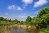 Amphibian Pond 14850