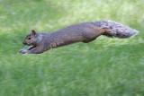 Supersquirrel 20080616