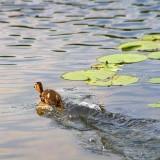 Running On Water 20080626