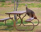 Turkey On The Table 6482
