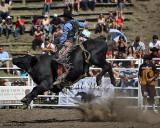 Riding the Black Bull