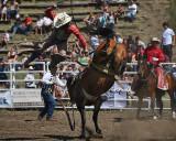 Saddle Bronc Ride