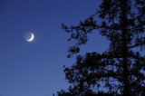 The Setting Crescent Moon