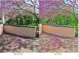 Flower-Tree-compare-1024.jpg